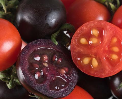 pomidor to warzywo
