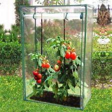 домати сибирско ранни прегледи