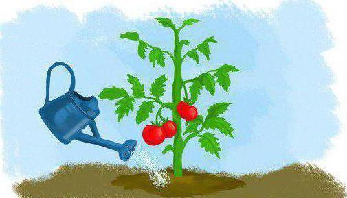 condimento superiore pomodoro lievito secco