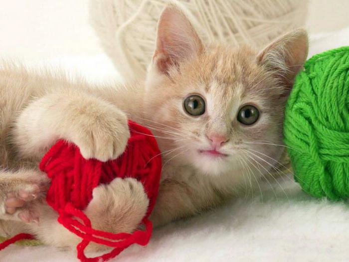giocattolo per un gattino