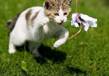 come fare un giocattolo per un gattino