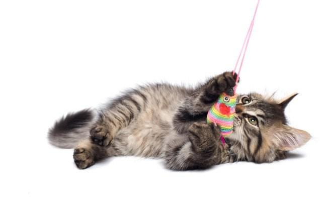 come fare un giocattolo per un gattino fai da te
