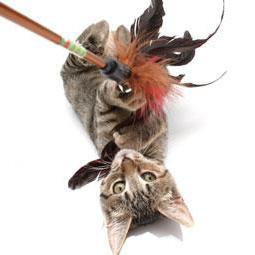 giocattoli di carta per gattini