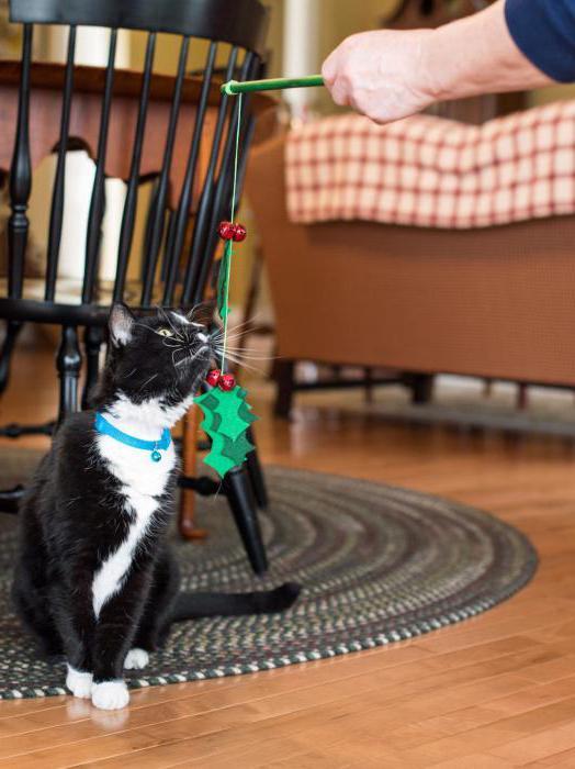 hračka pro koťátko to udělejte sami