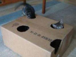 hračky pro koťata dělat sami fotku