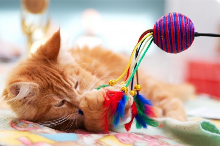 giocattoli di gatto