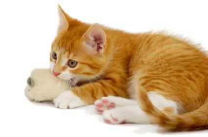 giocattoli per gatti con le proprie mani