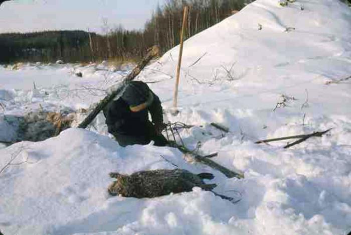 Лов на даброве у зими