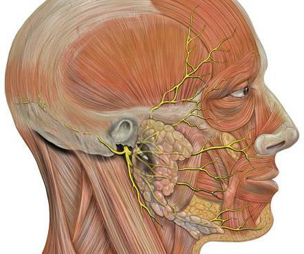 trattamento per la paralisi del nervo facciale