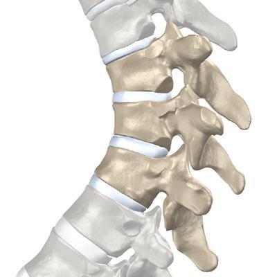 trattamento dell'osteocondrosi della colonna vertebrale toracica a casa