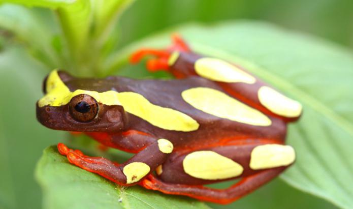 foto di rana di albero