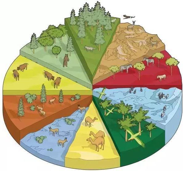 esempi di biogeocenosi