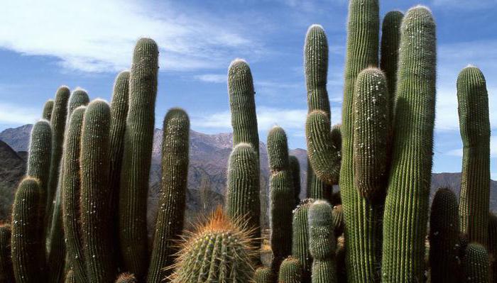 capacità di gestione dei sistemi ecologici sull'esempio della biogeocenosi