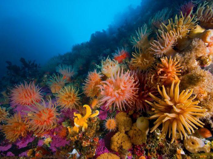 esempi di biogeocenosi con descrizione