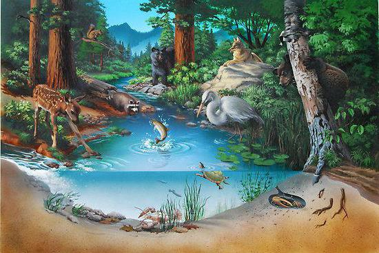 esempi di biogeocenosi naturale