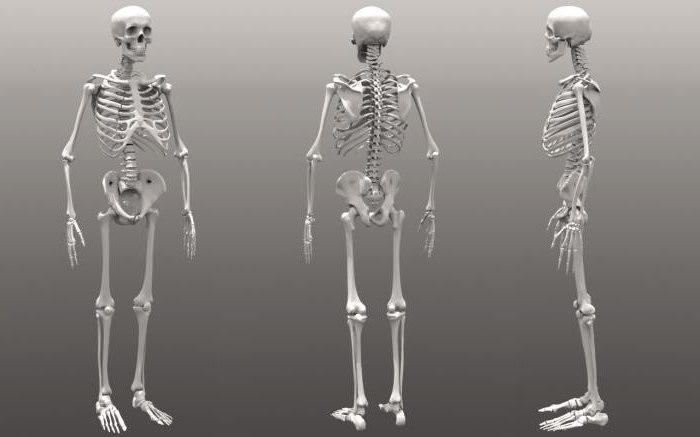 Типове кости