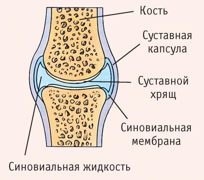 Какви видове костни връзки знаете?