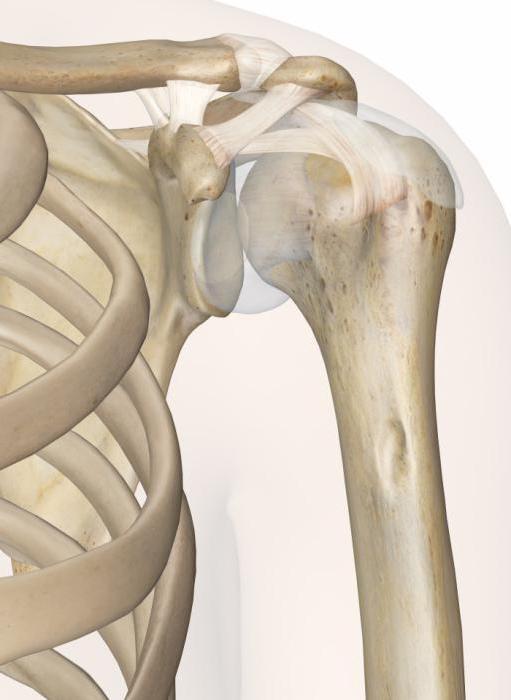 3 вида костни връзки