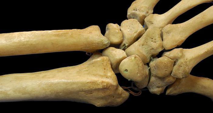 Какви видове костни съединения съществуват
