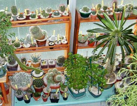 notranji kaktusi