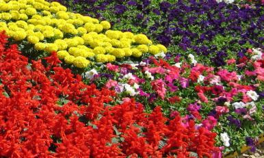 vrste cvijeća