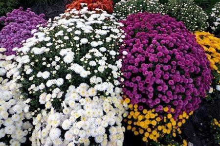 vrste vrtnog cvijeća