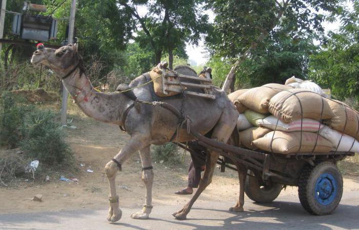 trasporto trainato da cavalli