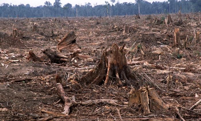 krčenje gozdov