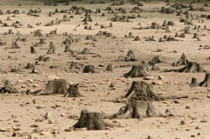 posledic krčenja gozdov