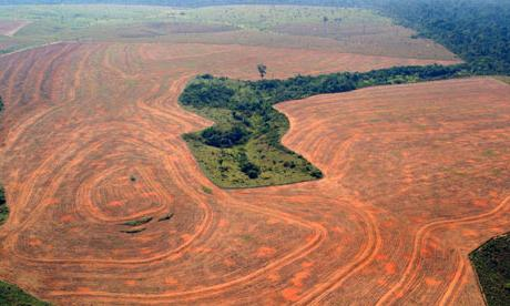 problem krčenja gozdov