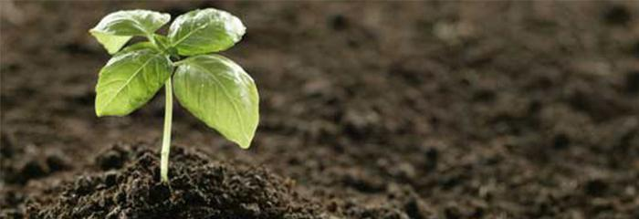 močovina instrukce hnojiva