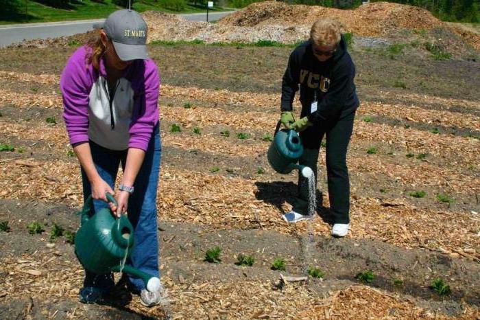 органичен тор за градината