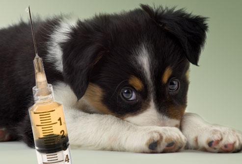 вакцинације штенаца