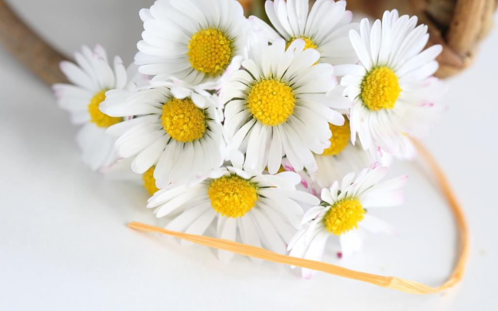 fiore di festa