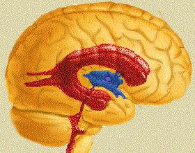 stranski prekat možganov