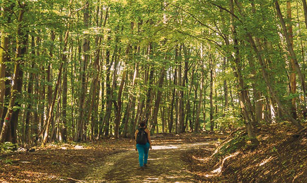 Прођите кроз Бечку шуму