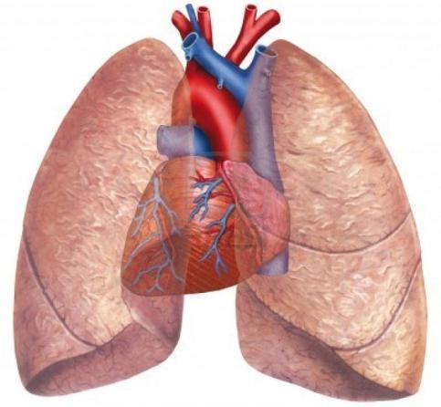 capacità polmonare media