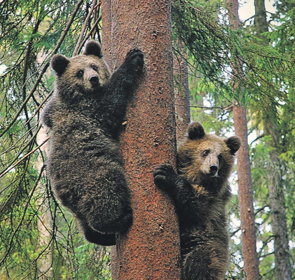 "фаунистичен парк ""Водлозерски"""