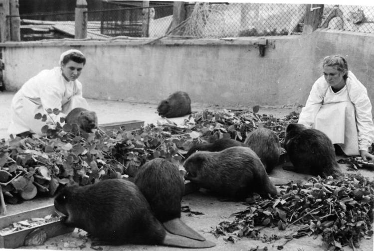 rezerva je bila ustvarjena za povečanje populacije bobrov