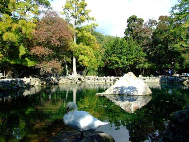 Labutí jezero v parku