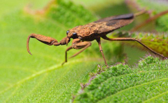ime vodenog škorpiona
