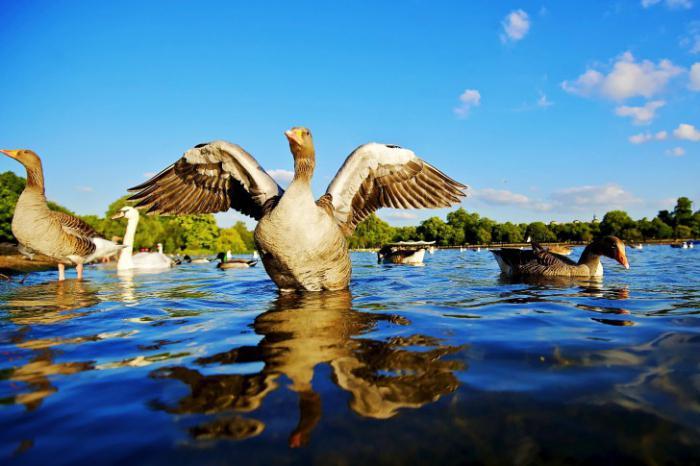 Vodna ptica