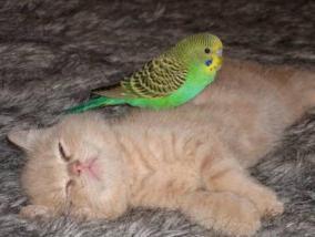 seks s papigajima