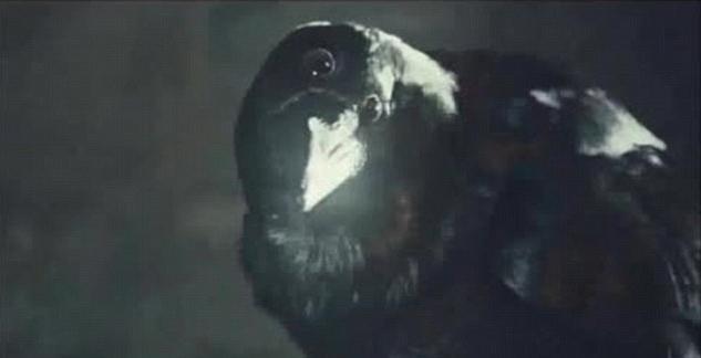 zašto sanjaš o crnom gavranu