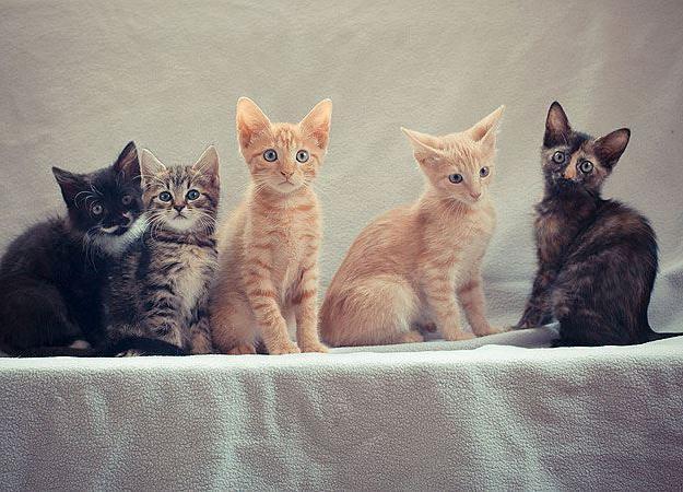 Какво може да нахрани котенцата