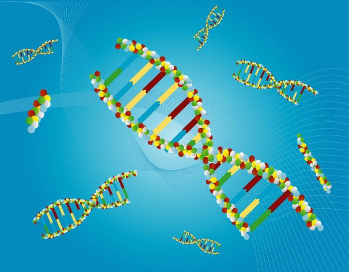 syntéza enzymů