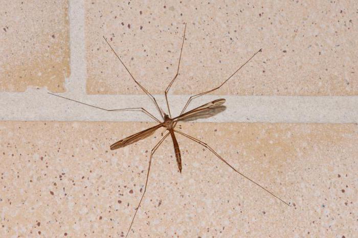 чега се плаше комарци