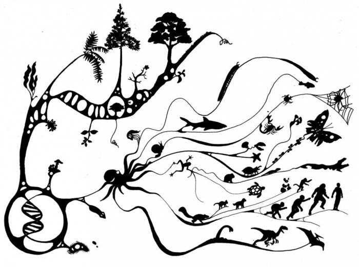 razvoj živih organizmov