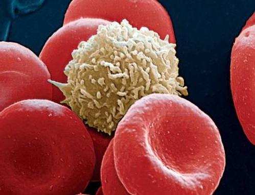 funkcijo človeške krvi