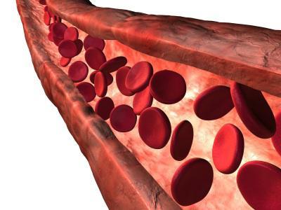 delovanje krvi v telesu